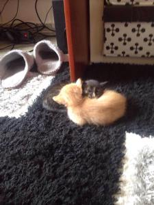 γατακια2