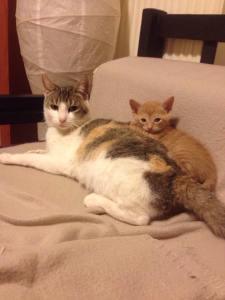 γατακια3